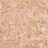 Биопласт 1011 жидкие обои, золотистые, шёлк